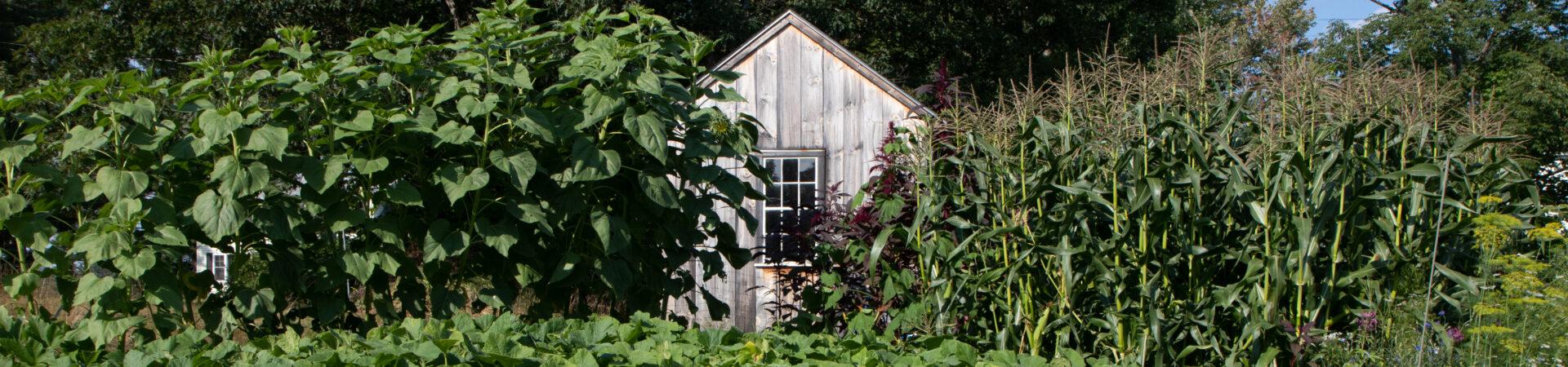 Harrisville Community Garden